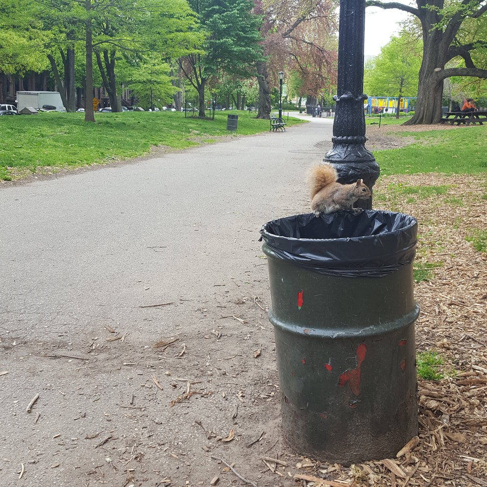 The old trash drums scattered across the park were not only unsightly, but allowed easy access for a variety of rodents.