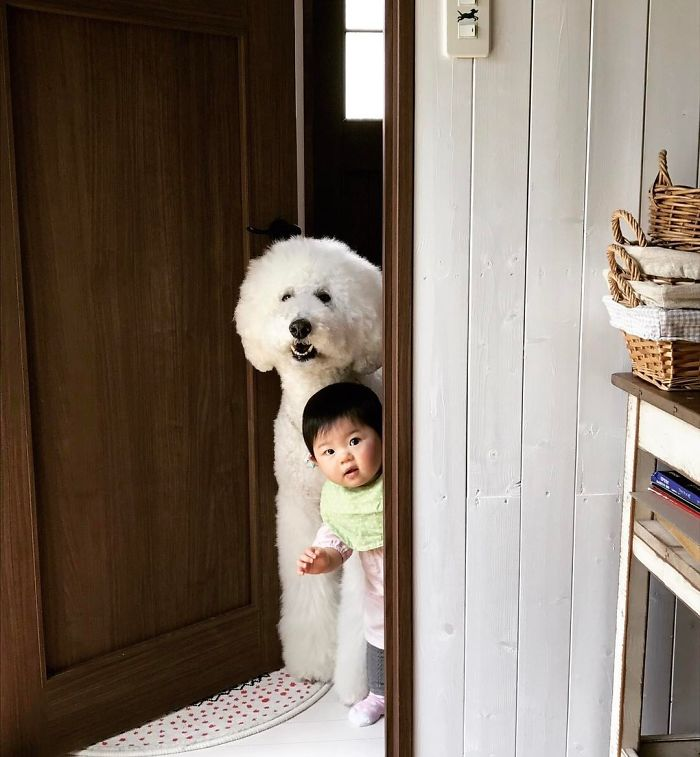 girl-poodle-dog-friendship-mame-riku-japan-13-59819d4839265__700.jpg