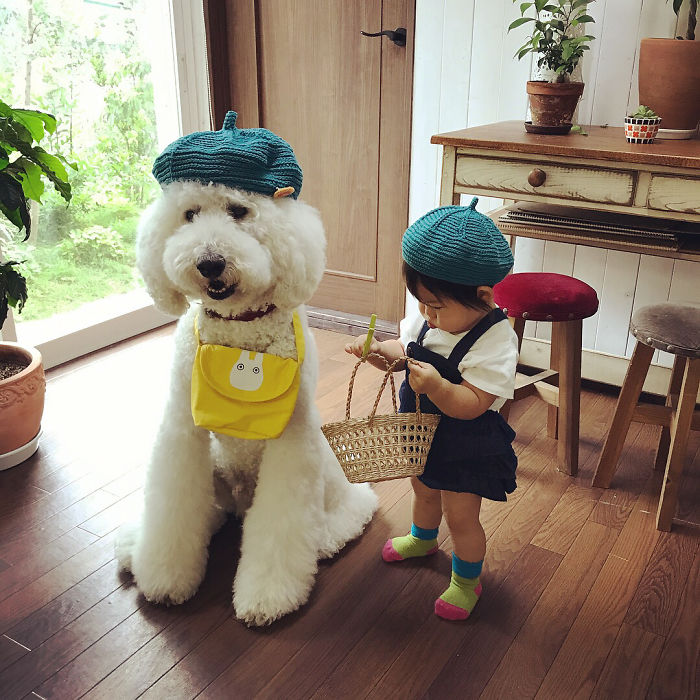 girl-poodle-dog-friendship-mame-riku-japan-29-59819e1e4c23e__700.jpg