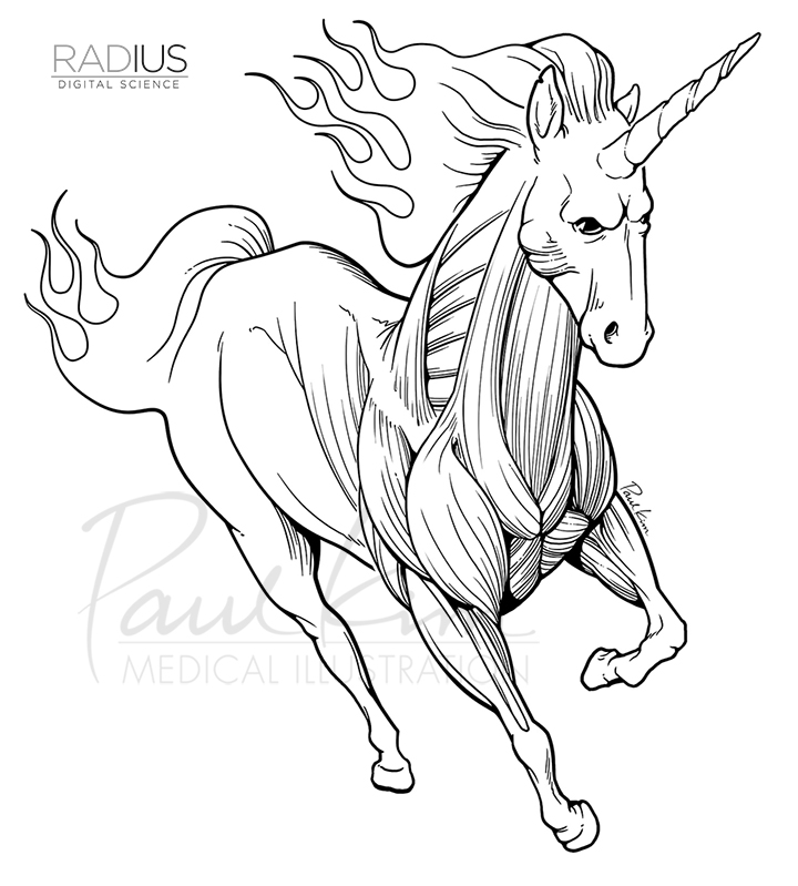 Unicorn T-Shirt Design