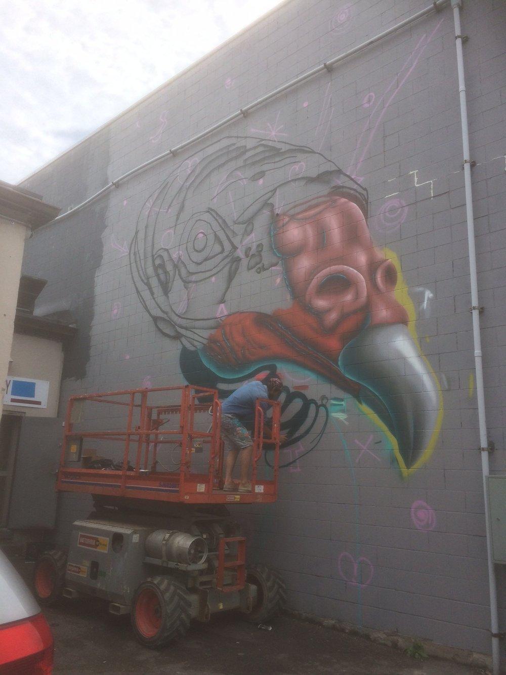 Birdo-thursday.JPG