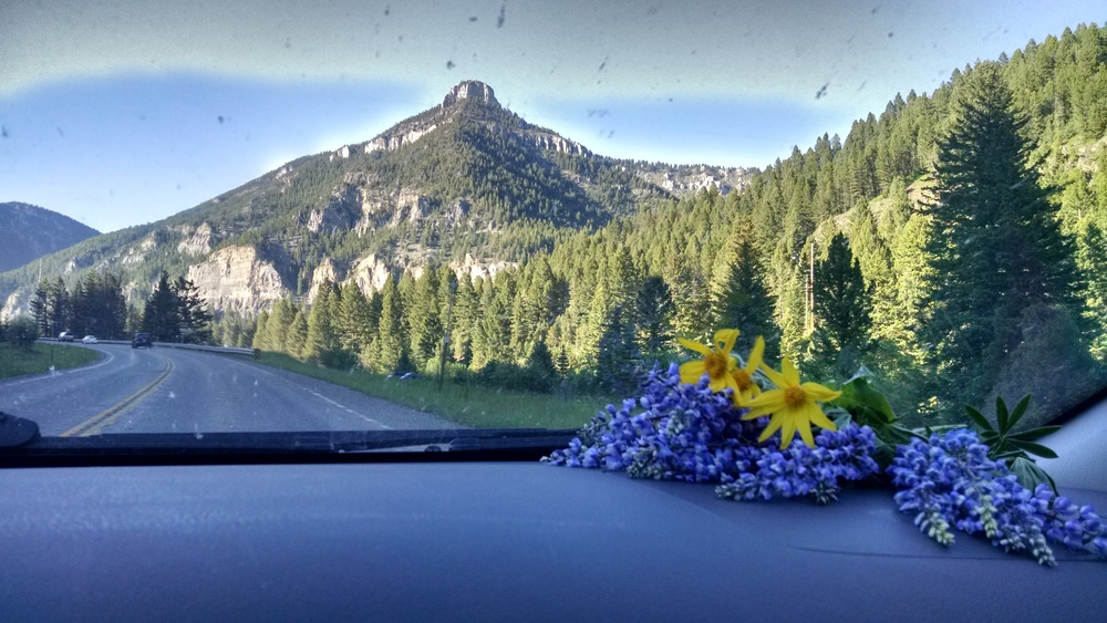 Piles of ildflowers on the dash are a regular site in our car during the summer.
