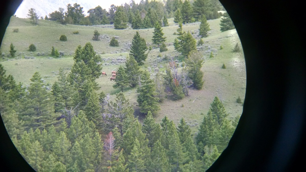 I scouted elk at least 1x a month.  That's a full day committed usually, so doing it even that many times was a stretch.