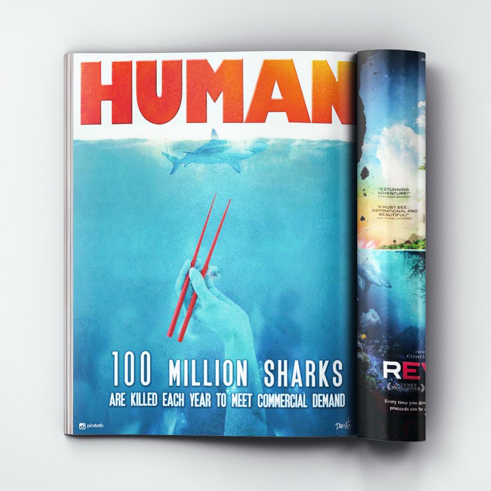 Shark fin 3.jpg