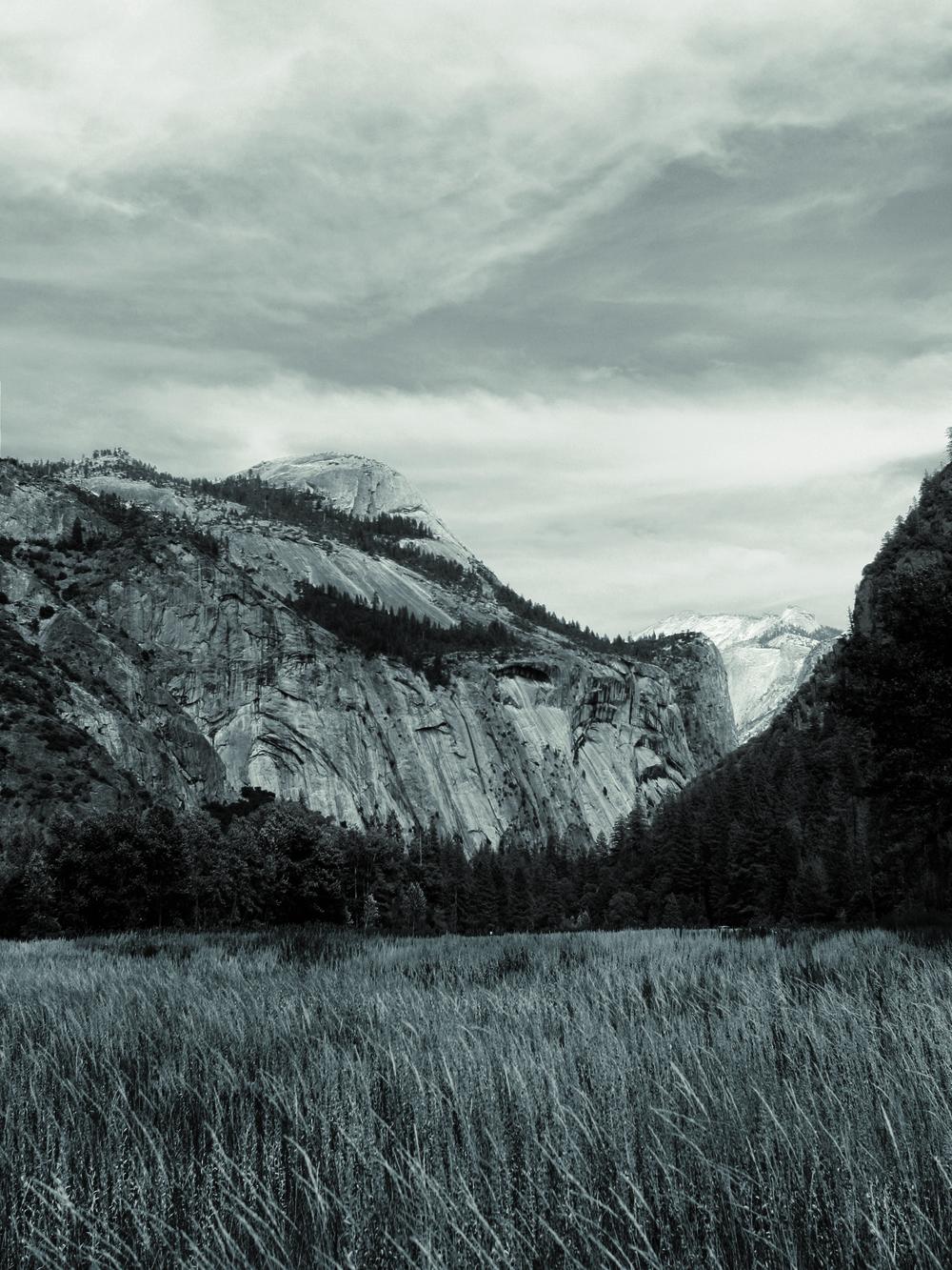 Meadow B&W_V2.jpg
