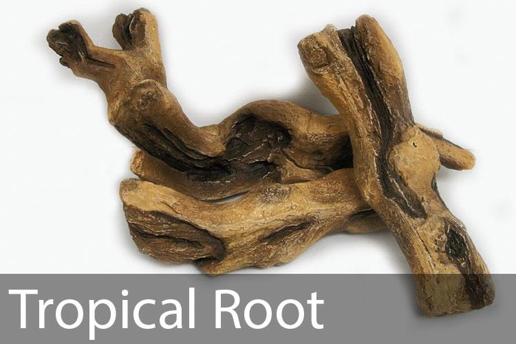 Tropical-Root.jpg