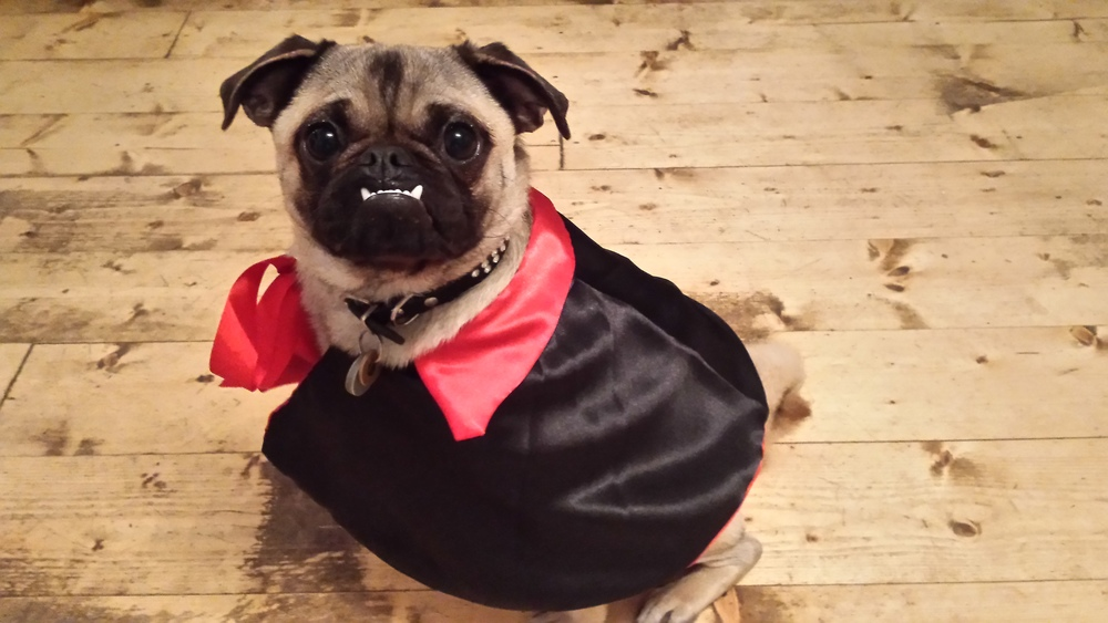 Christopher Lee as Dracula - just like his namesake, although a touch shorter and rather more pug-like