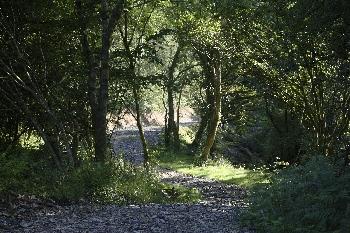 Woodland trackw2.jpg