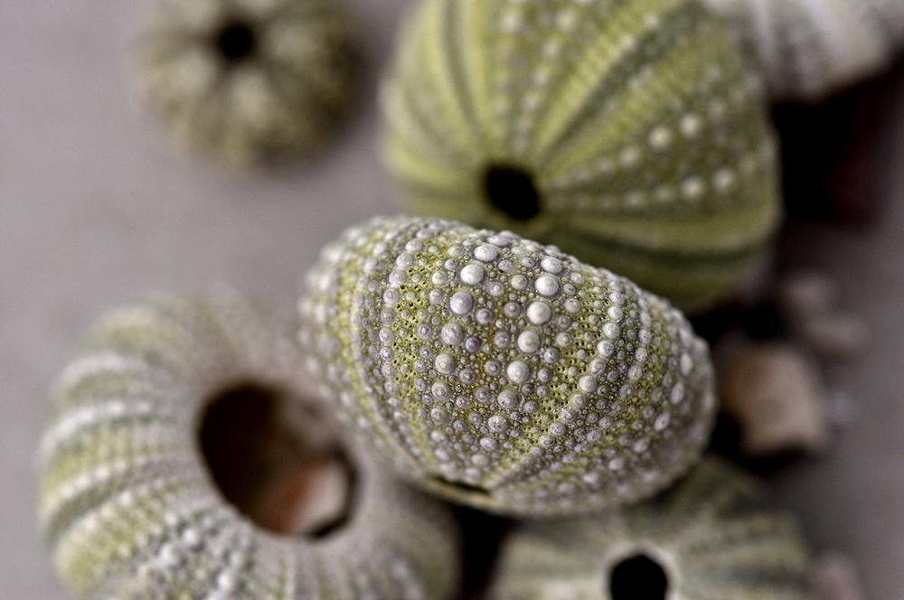 urchins.jpg