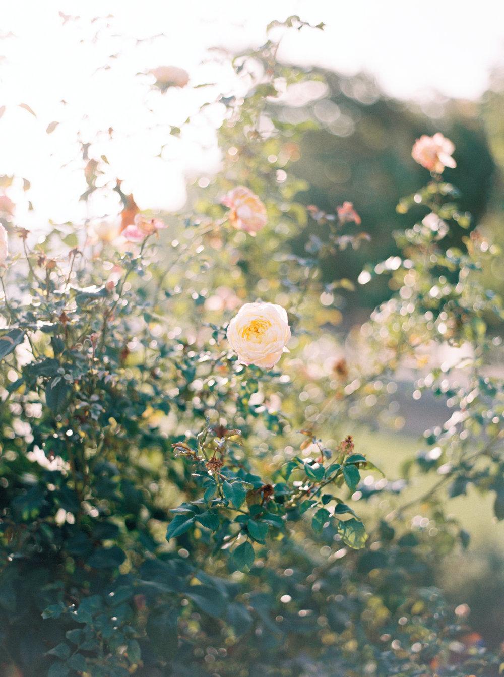 Katie Nicolle Photography-43.jpg