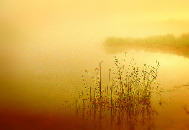 """""""Golden Pond"""" by James Jordan used with Attributions-No DerivsCC License 2.0"""