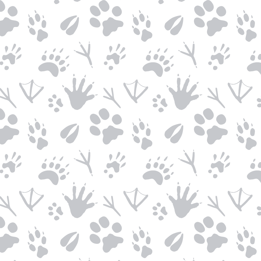 Pattern design for interior of a packaging concept