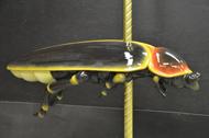 Beetle 4B.JPG