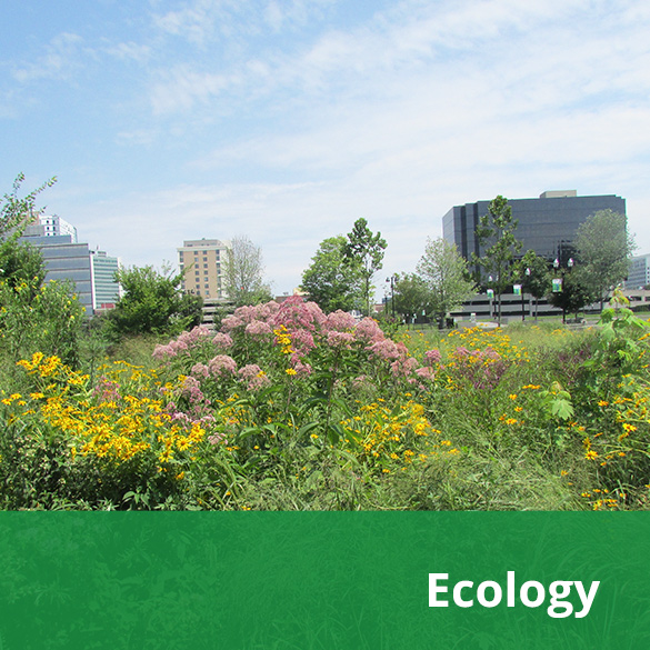 ecology-mlr.jpg