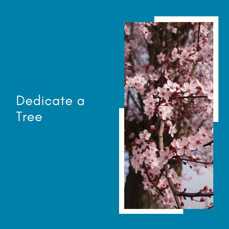 Dedicate a Tree.png