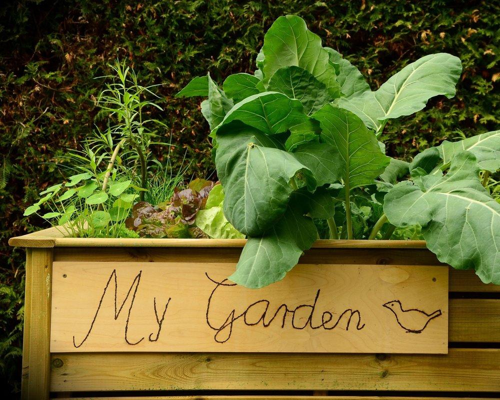 garden-1427541_1920.jpg