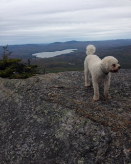 Charlie is king of the mountain!