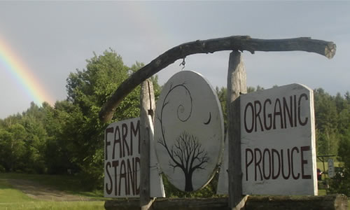 Wild Branch Valley Farm Stand   Flowers, herbs, baskets, seed   Wild Branch Road   Craftsbury VT 05826   Phone: (802) 586-7513