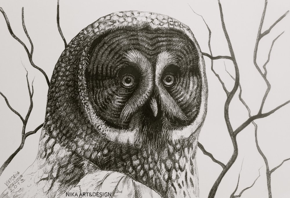 Owl. Ink on paper, 30*21cm 2013