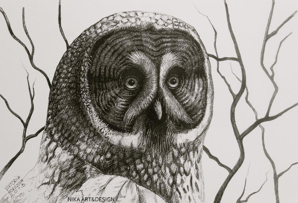 Owl. Ink on paper, 30*21cm 2013