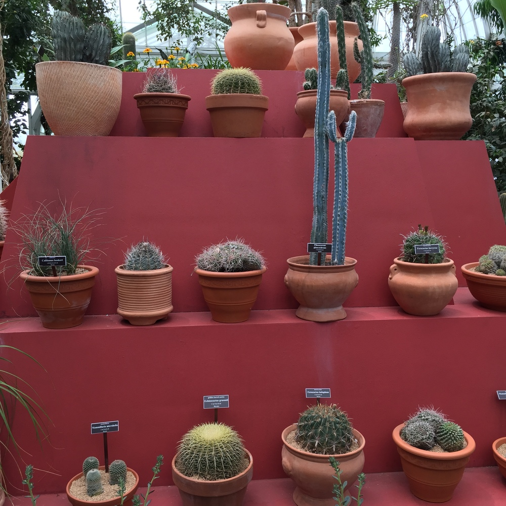 A beautiful composition of potted Cactus plants