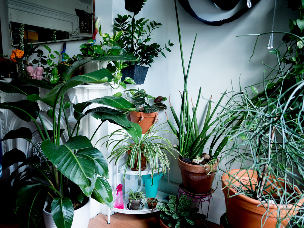 Natalie's beautiful plant-filled bome.
