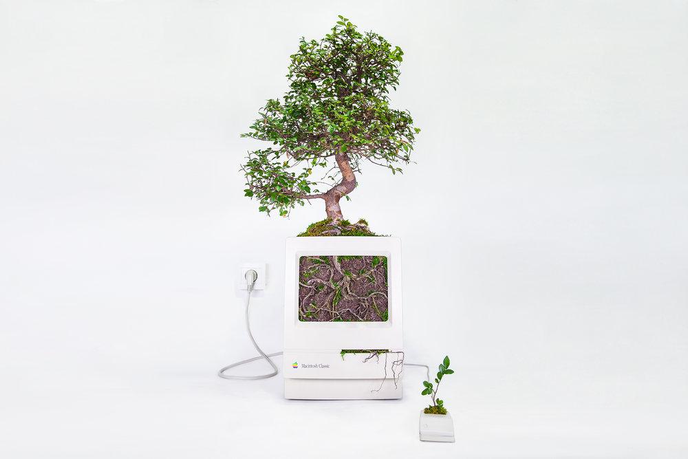 Plant_you_Mac_macbonzai_monsieur_plant_2016_1_OK.jpg