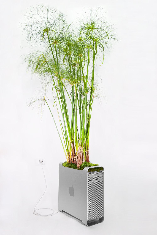 Plant_Your_Mac_macpyrus_Monsieur_plant_2016_4_ok.jpg