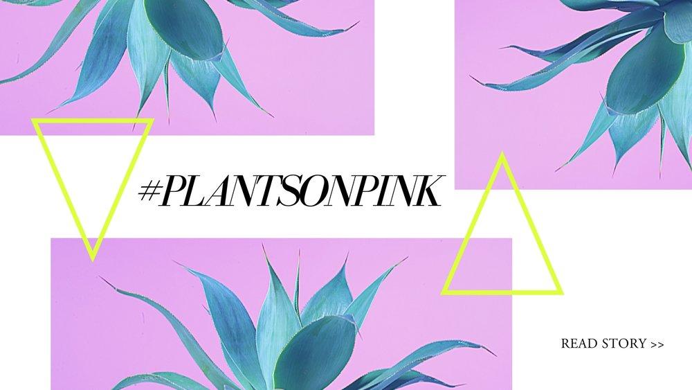 images: @plantsonpink