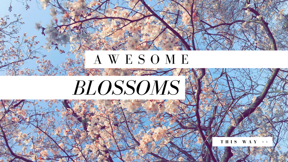 Awesome Blossoms 2.png