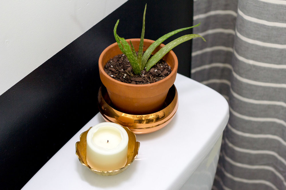 Potted aloe in black and white bathroom