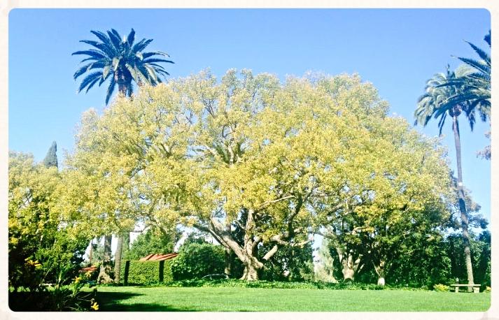 Big tree, image©gunjanvirk.
