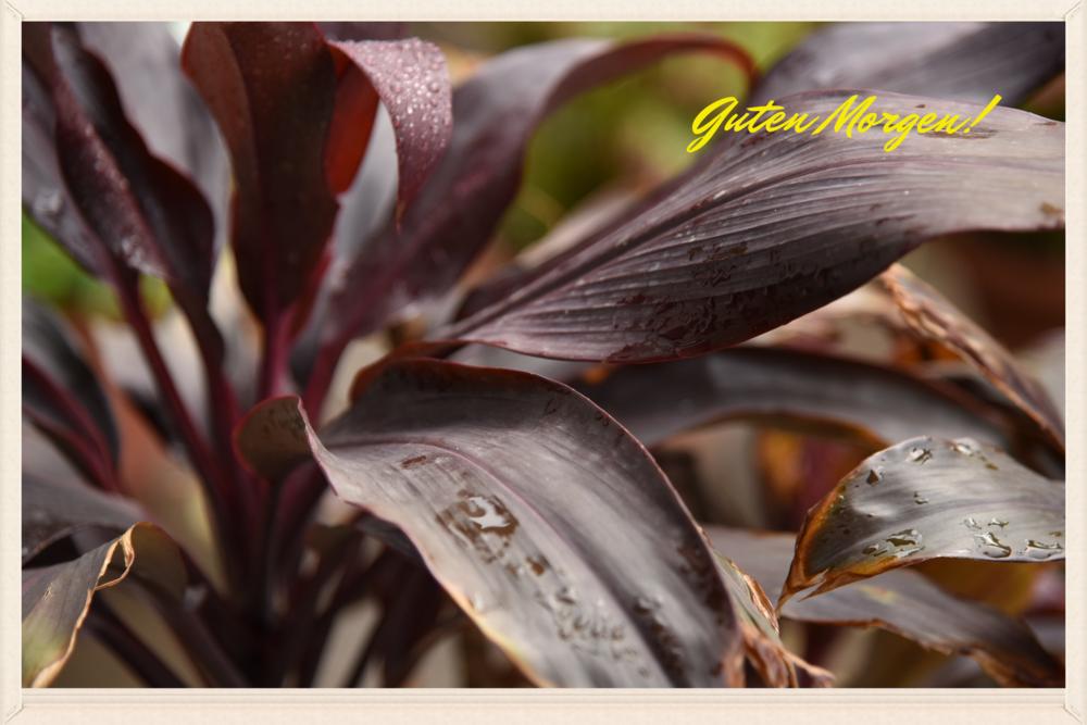 Plants with rain drops. Image©gunjanvirk