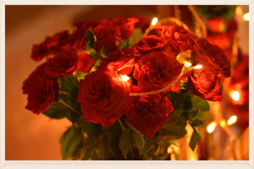 Roses with lights, image©gunjanvirk