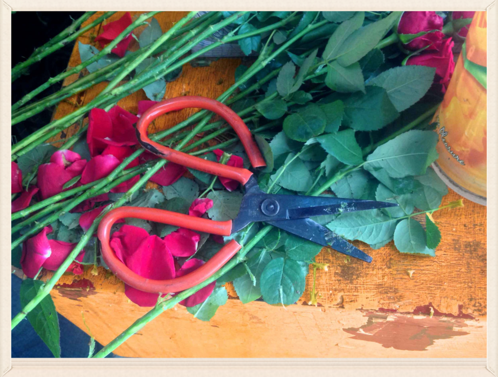 Rose stems and scissors, image©gunjanvirk