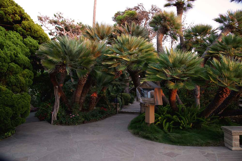 Palm trees at SRF meditation gardens, Encinitas, CA. Image©gunjanvirk