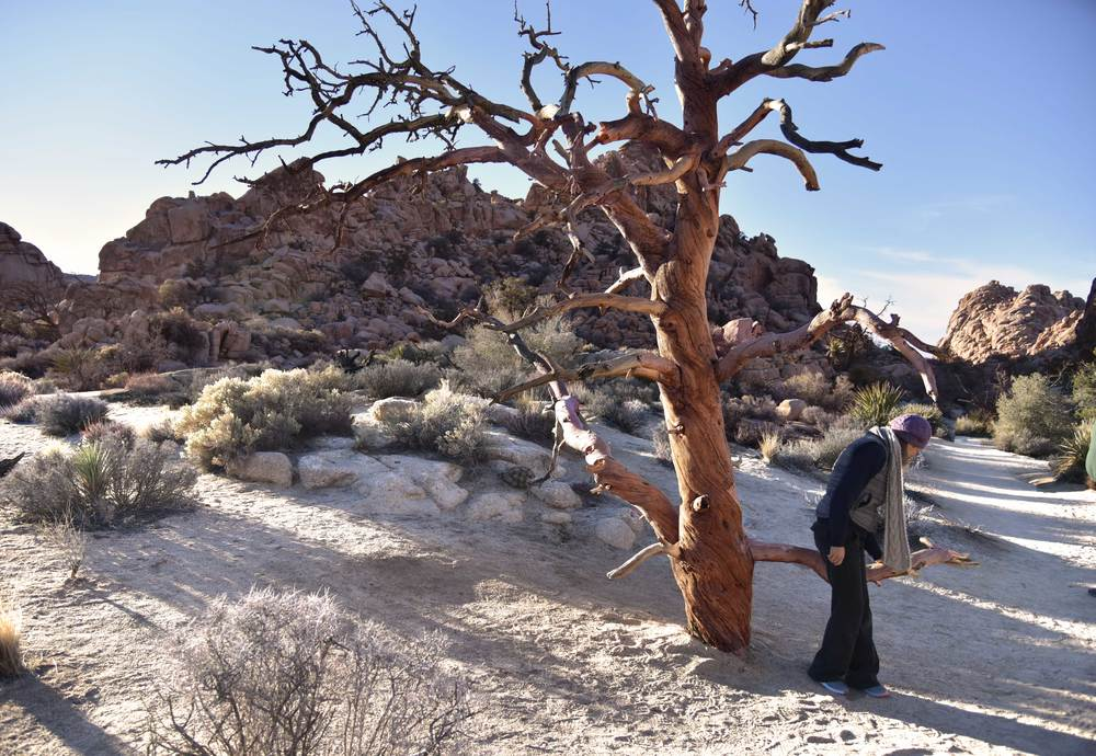 My friend Karol investigating a lone tree, Joshua Tree National Park, image©sourcingstyle.com