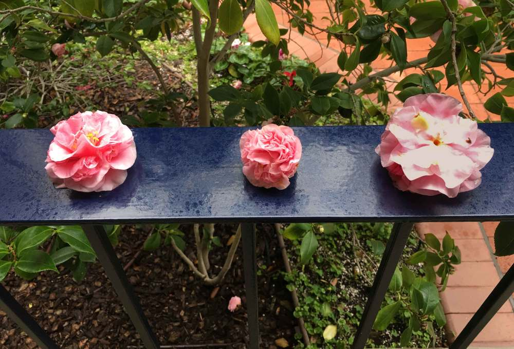 Somebody had put these flowers on the railing outside my room when I was on retreat once! I find it a brilliant illustration on getting the right perspective and prioritizing. :) Ofcourse, I quickly snapped a picture! Image©gunjanvirk
