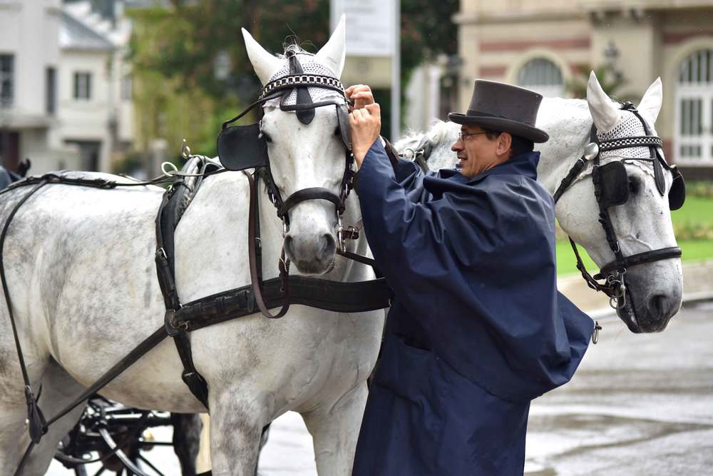 Coach driver preparing horses to drive his carriage, Baden Baden, Germany. Image©sourcingstyle.com