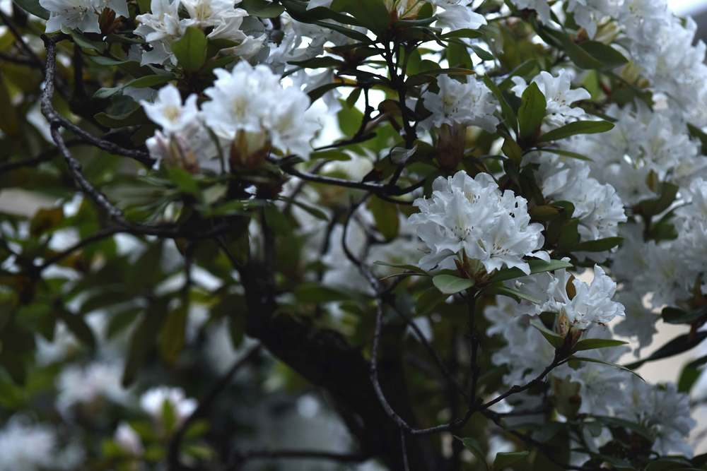 white spring flowers, spring blossoms, Image©sourcingstyle.com