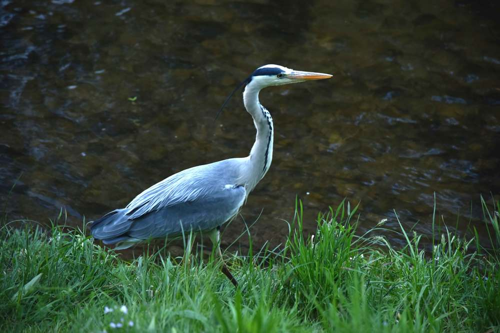 A bird rests on the banks of the Oos river, Lichtentaler Allee, Baden Baden, Germany. Image©sourcingstyle.com