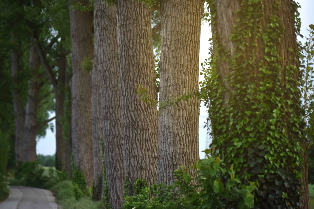 Larger than life trees, village near Düsseldorf, Germany. Photo: Nicola Nolting, Image©sourcingstyle.com