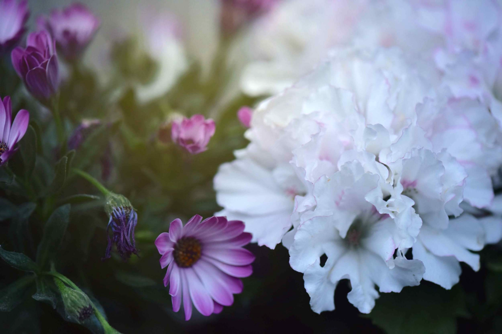White, lilac and purple flowers, Photo: Nicola Nolting, Image©sourcingstyle.com
