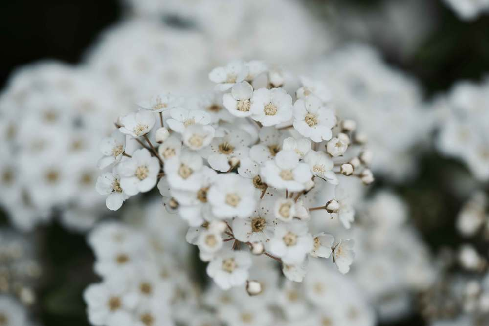 white flowers, Gönneranlage, Baden Baden, Germany. Image©sourcingstyle.com