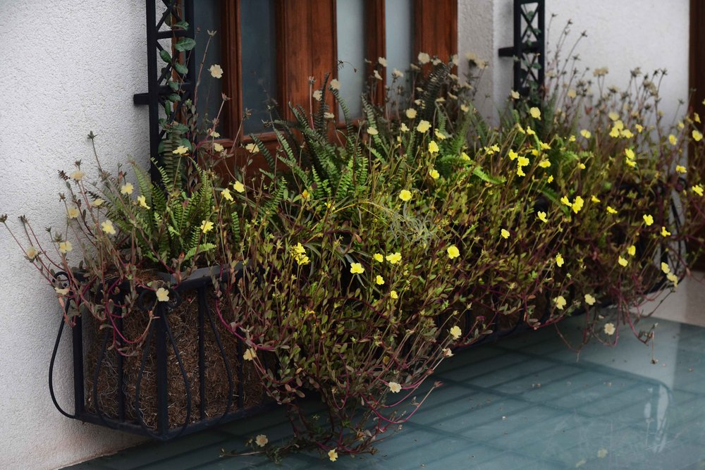 Landscape design by Geeta Singh, wrought iron window planter. Image©sourcingstyle.com