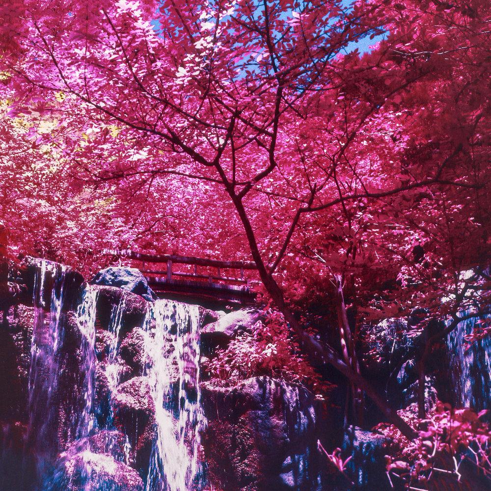 Magentaforest.jpg