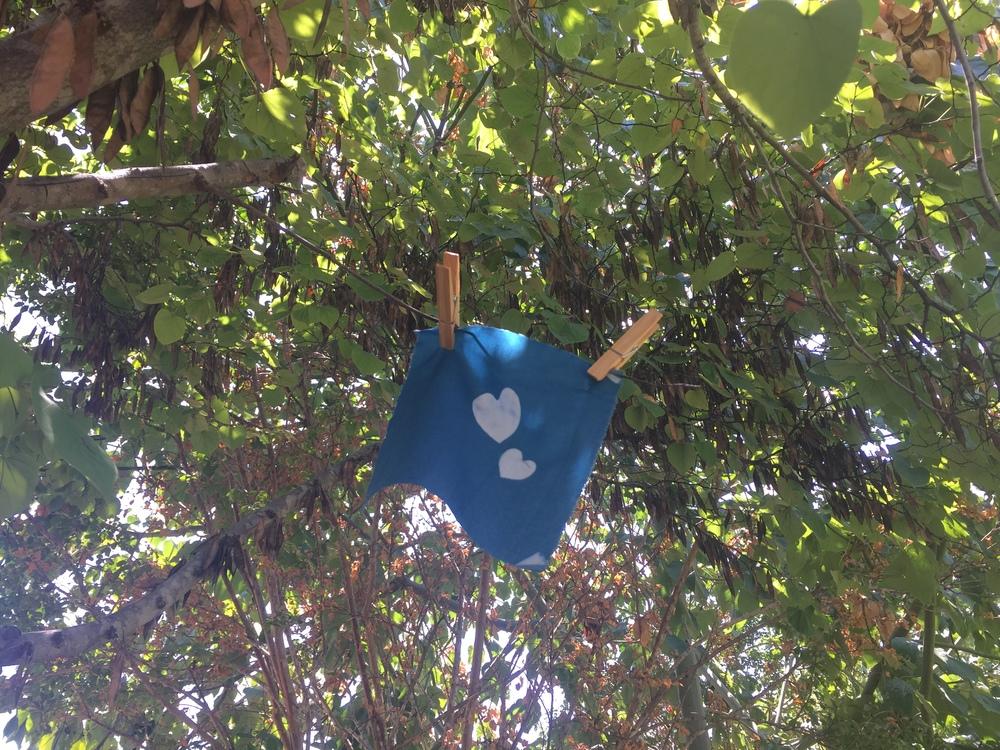 cyanotype.jpg
