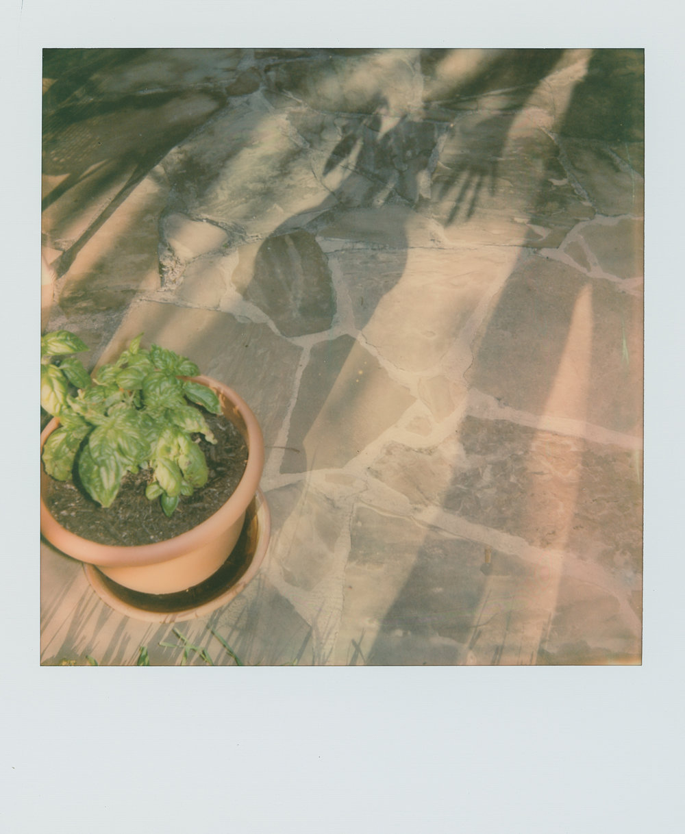 pola week shadow gardener (1 of 1).jpg