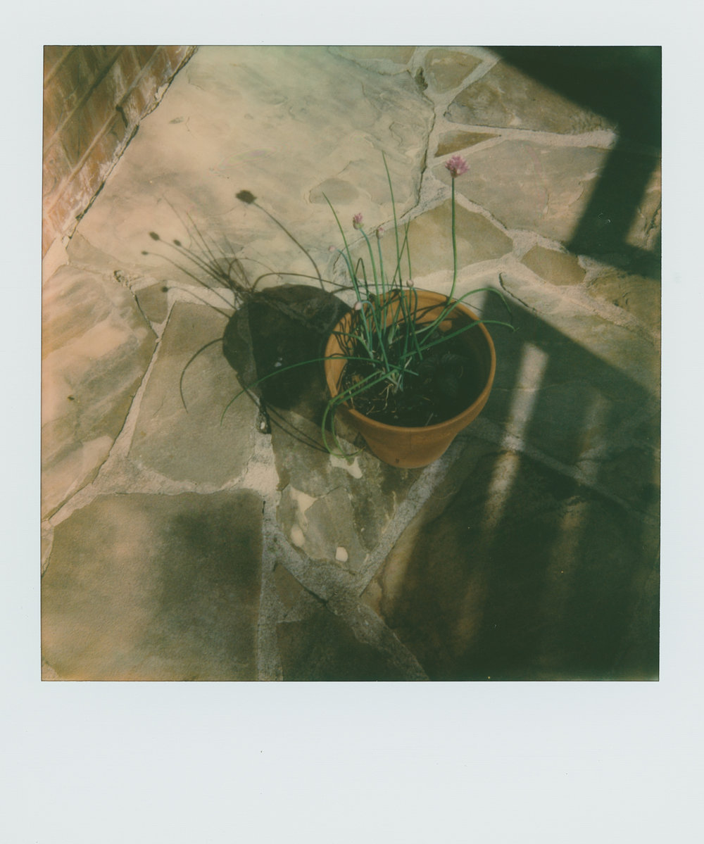 pola weekchives (1 of 1).jpg