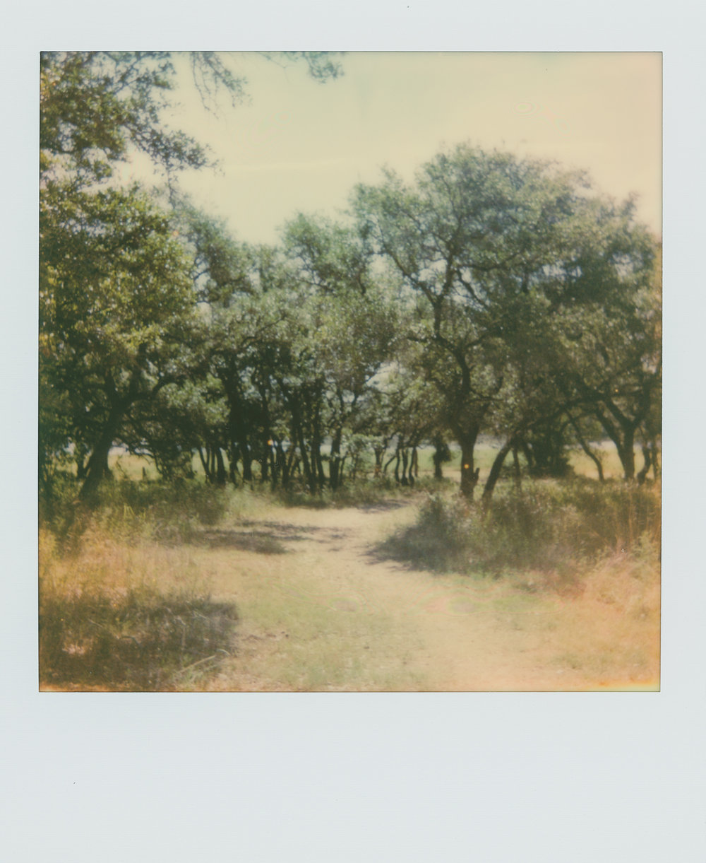 pola week trees & path (1 of 1).jpg